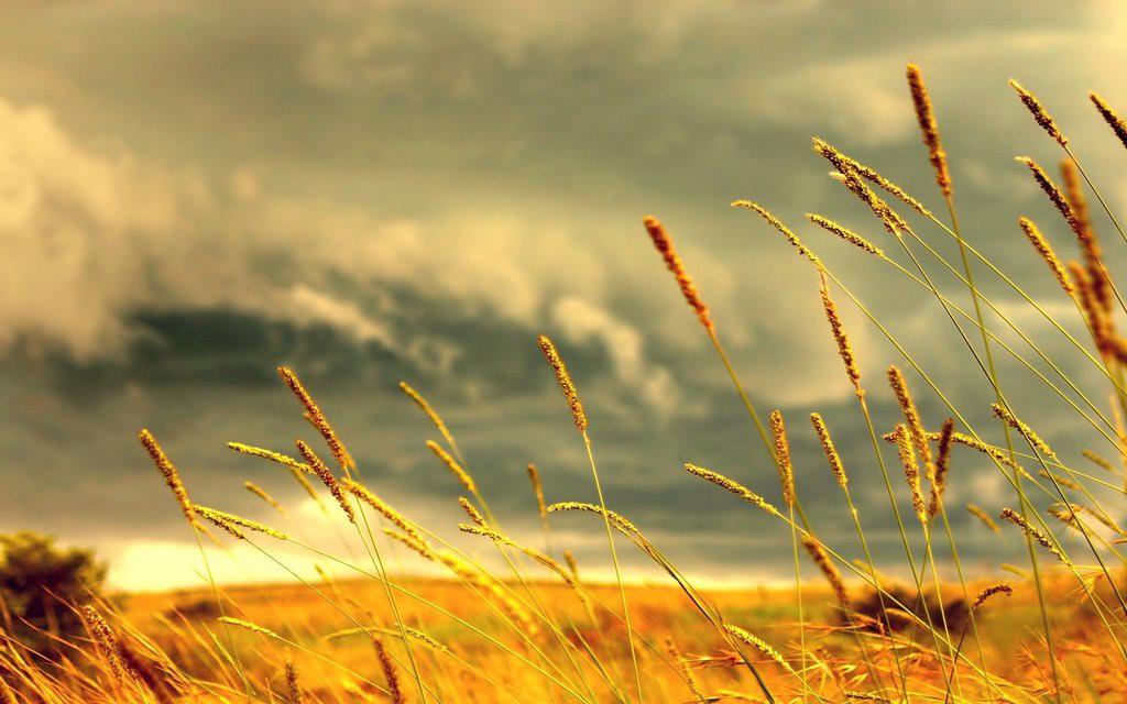 Radio kỳ 417: Lòng tốt như ngọn cỏ!